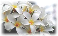 sidebar-blomst